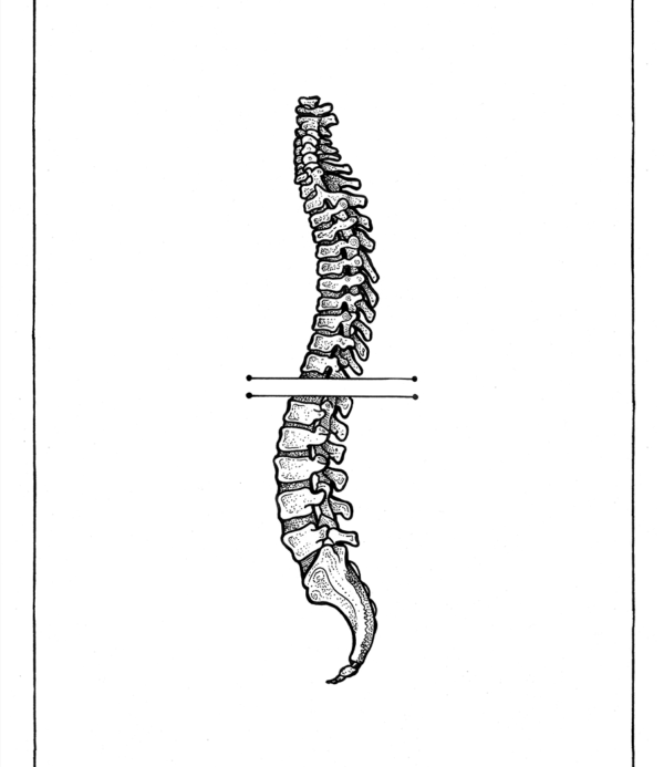 Anatomic Spine - Rune Carls